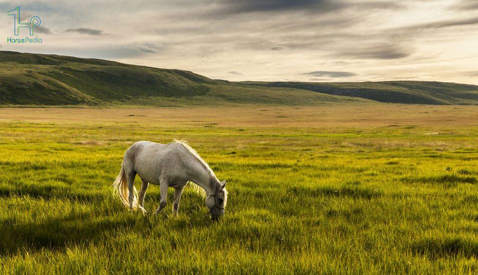 تغذیه مناسب برای اسب تا سالم بماند