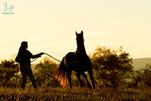 آموزش های پایه برای یک اسب جوان