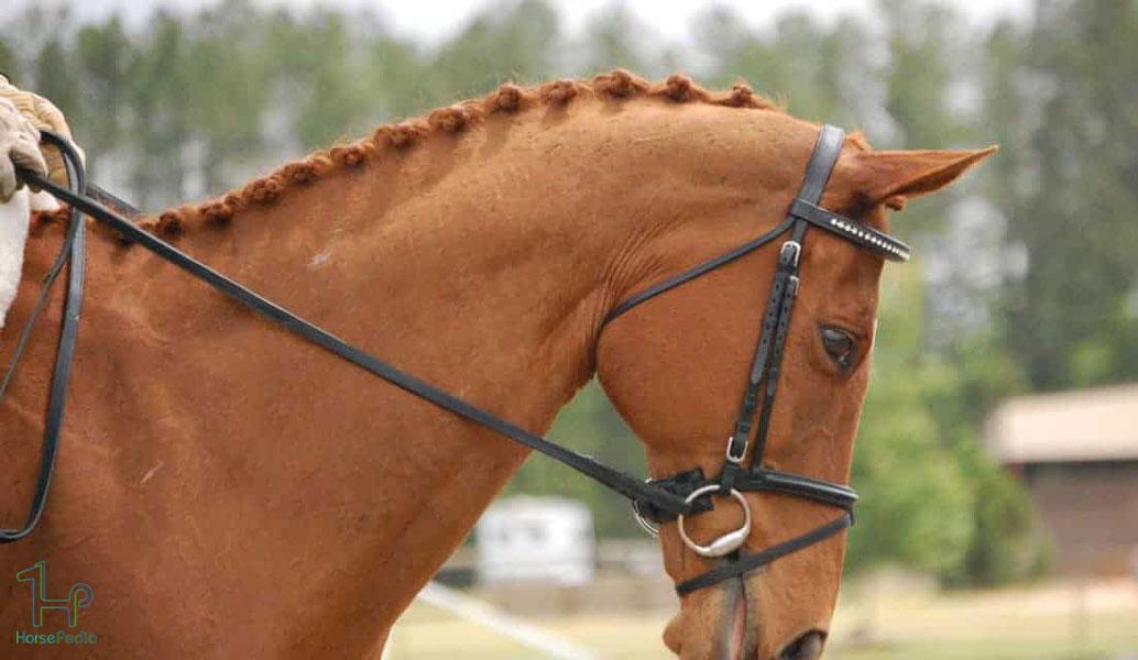 انواع نوزبند اسب و انتخاب بهترین آن