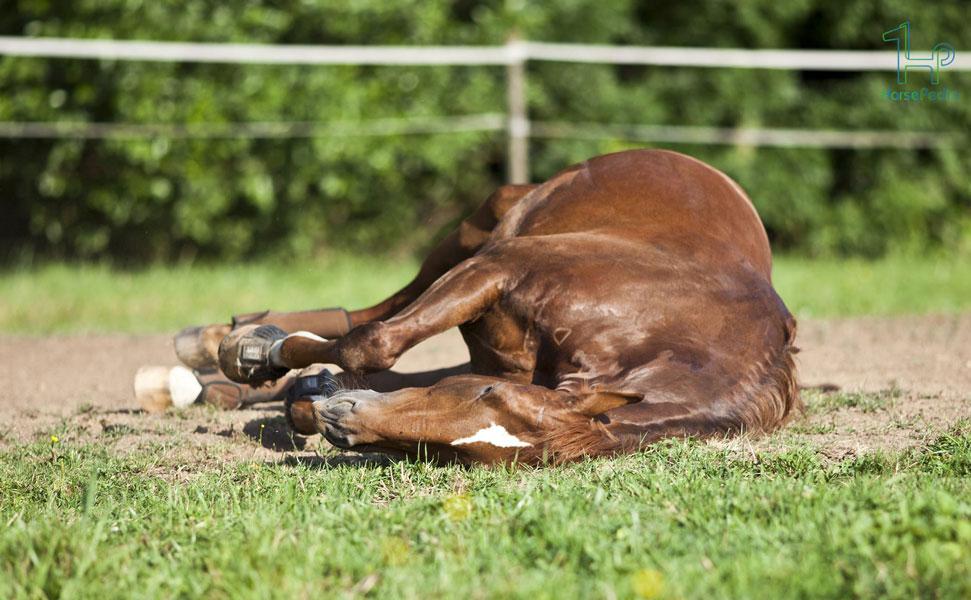 بیماری کولیک در اسب   علائم و روش های درمان و پیشگیری