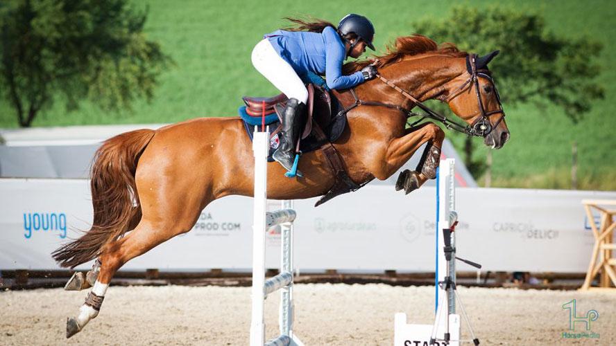مراحل آموزش پرش به اسب